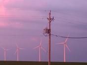 Pink windmills