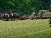 Hot Friday and Amish are busy making hay