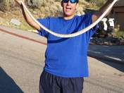 Caught and moved a four foot bull snake out of the street
