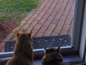 My two cats love looking out our front door each morning