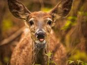 Silly Deer