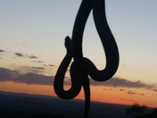 Three foot bull snake catch at sunset