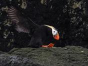 Treasure of Haida Gwaii