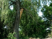 Large Branch Blown off Tree