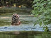 Splish Splash Owl was taking a bath