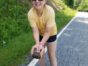 Saving the box turtle