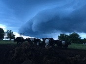 Storm Passing Over the Cattle