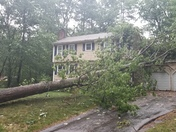 Tree on house in Londonderry