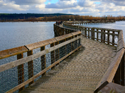 Billy Frank Jr. Nisqually National Wildlife Refuge