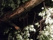 A tree branch from my neighbor's tree fell on my dad's house during last night's storm.