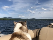 The boat life of a Siberian Husky Stewart Winisquam lake 2018