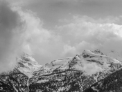 Mount Revelstoke National Park in B&W