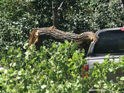Giant Tree Falls on Truck