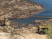 Driftwood Removal Folsom Lake