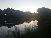 Bosque pond in the evening