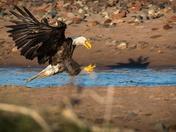 Eagle's Strike