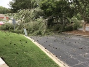 Tree down during storm