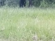 This bear was spotted on island ford rd in Calhoun falls, s.c. 29628