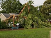 River birch tree down in our yard in Easley, SC