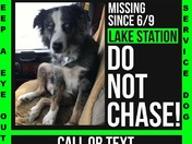 Missing / Stolen Service Dog - Is there another email I can sent the full story