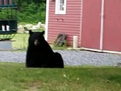 """""""Little"""" visitor this morning in our driveway in Ashby."""