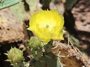 flower/bee