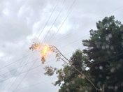 tree on power line exploded just after drove undr
