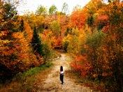 Autumn Isolation