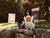 Celebrating 4th of July doggie style