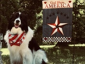 Wishing you a pawsome 4th of July!