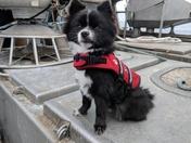 Squid fishing boat dog name skiff
