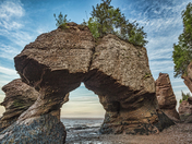 Hopewell Rocks Close Up