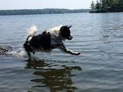Bandit's leap of faith