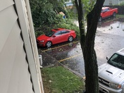 Tree struck by lightning in my apartment complex on July 1st
