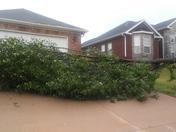 Last tree down
