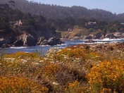 Beautiful Big Sur