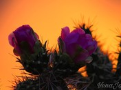 Sunsets and cactus