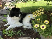 The dog Daysies of summer!