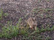 Still More Rabbits
