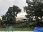 Tree down in Pella by Pella Corp!