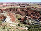 Petriefied Forest National Park