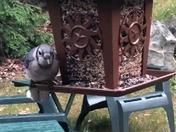 Bird Can't Share!