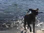 My dog, a stick & the lake