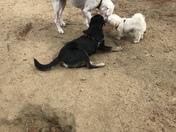 Dog park fun