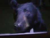 My house bear, my work bear & moms bear