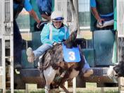 Camel, Ostrich, Zebra Races at Prairie Meadows