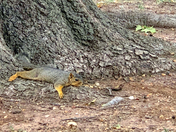 Even the squirrels are tired of this heat & humidity.