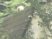 This is an albino squirrel that lives in my backyard.  Just wanted to share.