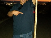 Caught a very agressive 4 foot bull snake and moved him out of the street