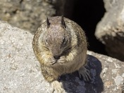 Wildlife Wednesday.. The friendly squirrels from Lover's Point